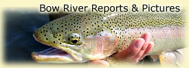 Click here for Bow River reports and pictures!