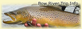 Click here for Bow River trip information