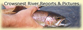 Click for Crowsnest River reports and pictures!