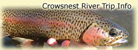 Click here for Crowsnest River trip information