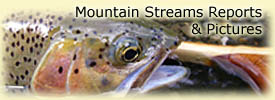 Click for reports & pics from our Mountain Streams