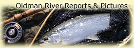 Click here for Oldman River reports and pictures!